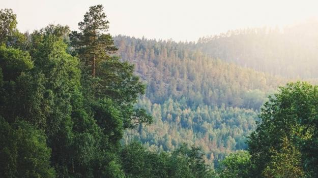 Kraftigt stigande pris på skogsmark när Ludvig & Co summerar 2020 års försäljningar.