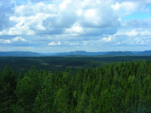 Skogsstyrelsen bedömer att kostnaden enbart för intrångsersättning i fjällnära områden kommer att uppgå till 360 miljoner kronor under år 2021.