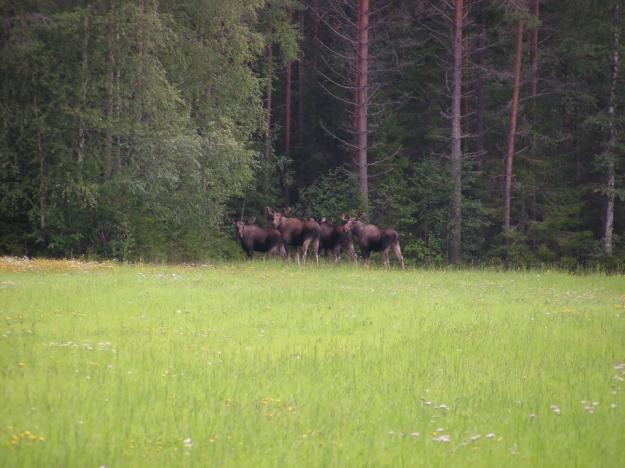 Skogen i Sverige har fortfarande för stora viltskador, och bara tre områden i landet klarar det nationella målet.
