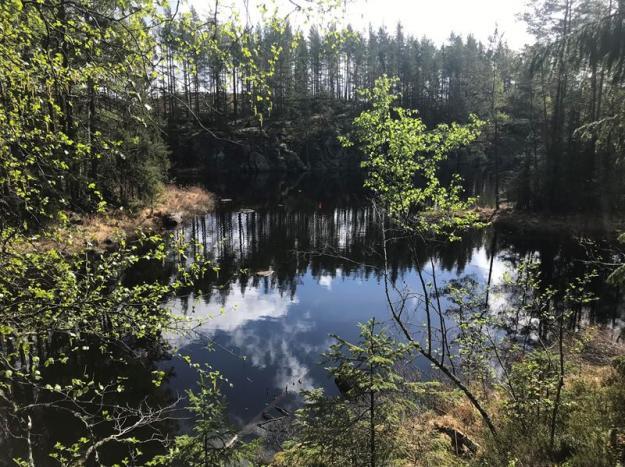 Damm vid Bergvattnet.