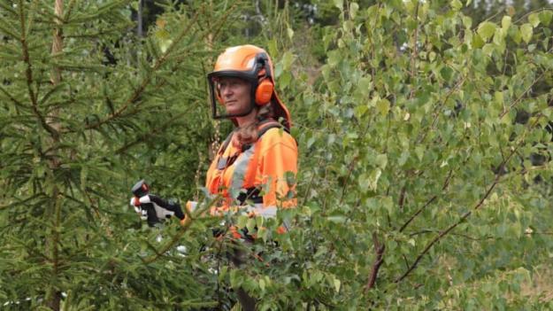 """Hur anläggs en blandskog? Det kan vi lära oss på Skogskunskap.se och i filmen """"Blandskog – en mångfald av valmöjligheter\"""