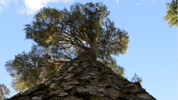 Skogen är den viktigaste komponenten i Sveriges strävan att motverka växthuseffekten, och en högre virkesproduktion ökar klimatnyttan. Det visar en rapport som sammanfattar kunskapsläget och undersökt skogsbrukets klimatpåverkan.