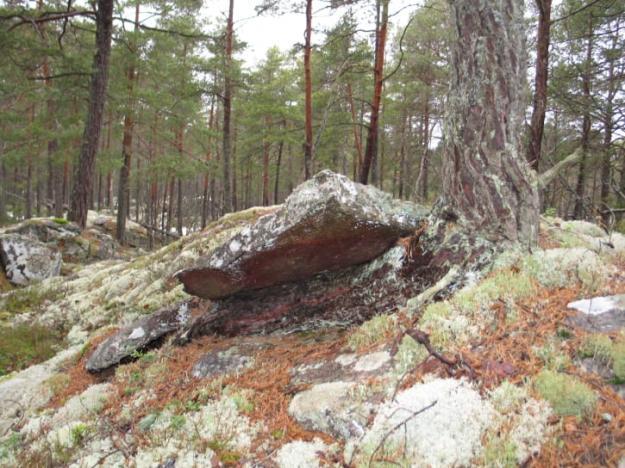 Naturreservaten Klyftamon och Stora Bjursjön utökas nu med ytterligare skog.