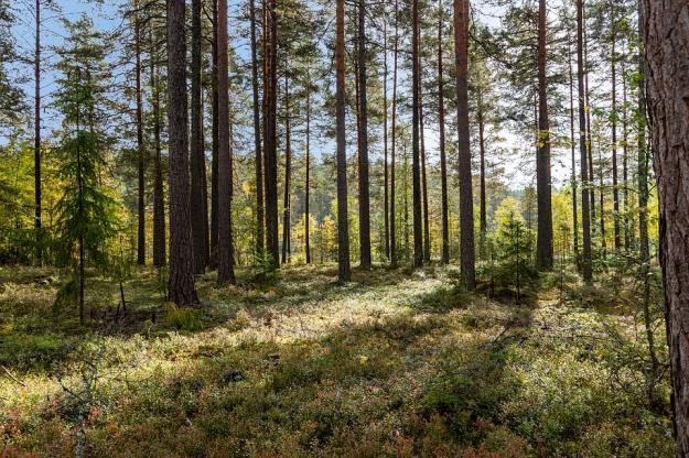 Skog i Mariannelund.