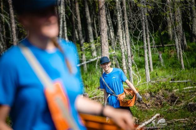 Sveaskog startar eget planteringslag i Älvsbyn.