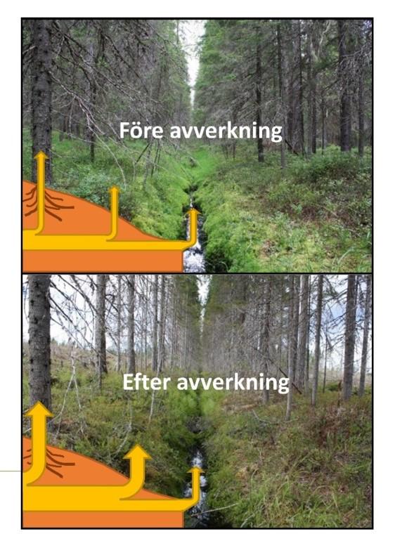 Växthusgasflöden i skog.