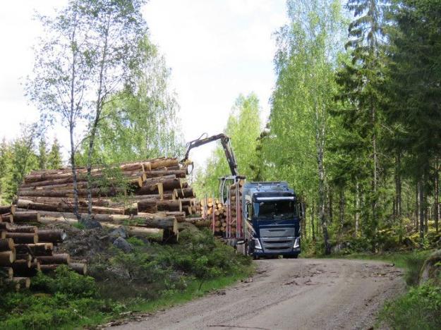 Nu har regeringen fattat beslut om en tillfällig regellättnad för att skogsbruket snabbare ska kunna utöka lagringen av timmer.