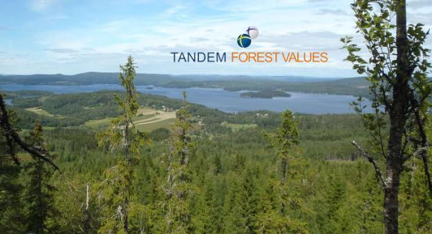 Projektet skapar långsiktigt samarbete mellan Sverige och Finland och stärker två redan framstående skogsnationer.