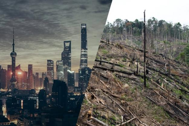 Shanghai - Regnskog