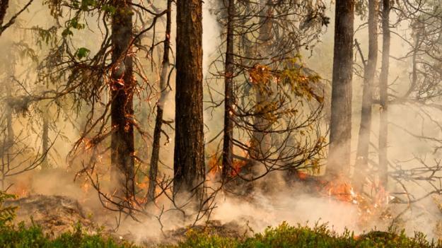 Naturvårdsbränning nära Storuman våren 2020.
