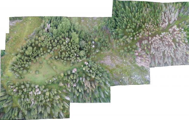 Enskilda träd eller områdenangripna av granbarkborre går lätt att hitta i Rapid Drone Maps sammanhängande bilder.