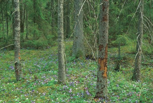 Skogsstyrelsen kan nu åter bilda områdesskydd och sköta skyddade områden.
