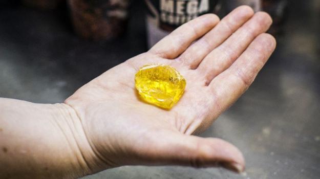 Det gula guldet - tallolja - som kan raffineras och användas i förnybara drivmedel.