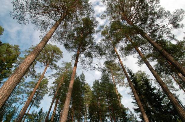 Härnösands stift förvaltar 94 214 hektar mark, varav 69 881 hektar är produktiv skogsmark.