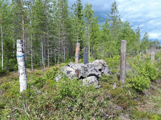 Kulturstubbar fungerar bra som markering för lämningar i skogen, här en milsten.