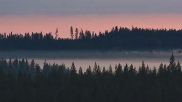Skogslandskap i Finland.