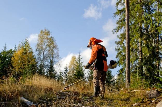 Körkort för röjsåg är en av meriterna som eftersöks av skogsnäringen.