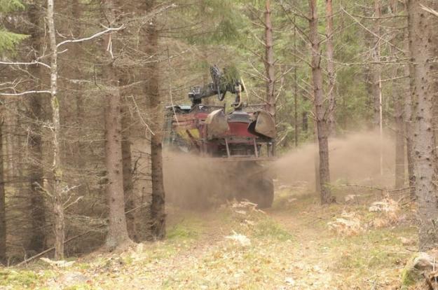 Få körskador när aska sprids i skogen, visar första uppföljningen.