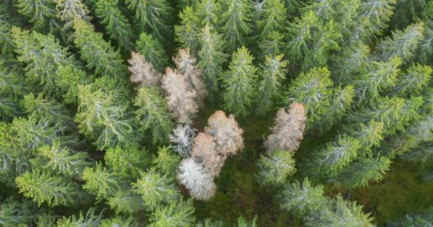 En preliminär bedömning visar att granbarkborren dödat närmare sju miljoner kubikmeter skog under 2020.