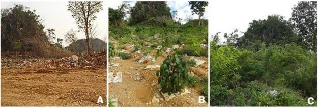 Exempel på framgångsrik trädplantering i Lampangprovinsen i Thailand. <span><span><span>Foto: Siam Cement och S. Elliott, Forest Restoration Research Unit, Chiang Mai University.</span></span></span>
