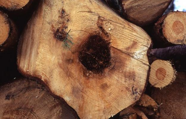 Rotröta spås bli vanligare med klimatförändringarna.