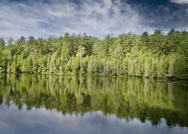 Intresset för att investera i Svenska skogen har varit stort, och högkonjunkturen avspeglas i prisbilden.