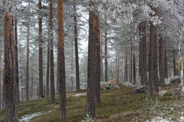 Före naturvårdsbränning på Käringberget.