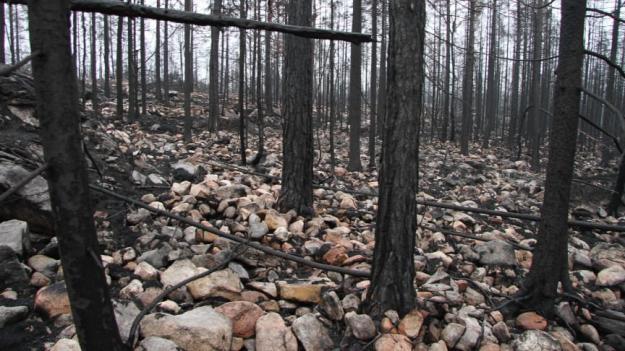 Med branden i Hälleskogsbrännan försvann nästan all organisk jord vilket gav stora kolutsläpp till atmosfären. Så här kunde det se ut tre månader efter branden.