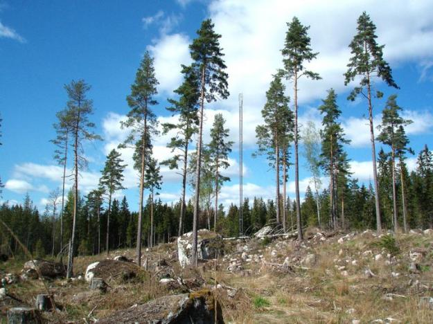 Skogsstyrelsen har uppmärksammat och korrigerat felaktig statistik när det gäller skattningar av hur mycket träd, högstubbar och lågor som skogsägaren lämnar på det avverkade området.
