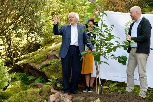 David Attenborough planterar det första trädet av \