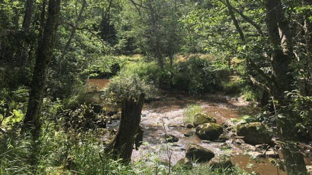Ölmans lövskogsraviner blir nytt naturreservat.