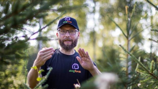 Mats Berlin, förädlingsforskare på Skogforsk.