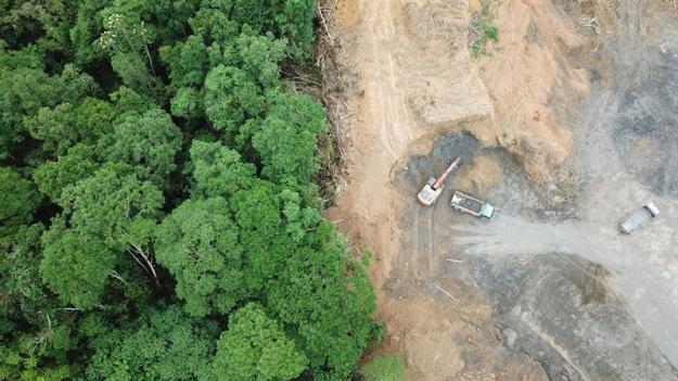 Avskogningen fortsätter. Detta är Borneos djungel iMalaysia, där skogen har huggits ner för att bli palmoljeplantage.