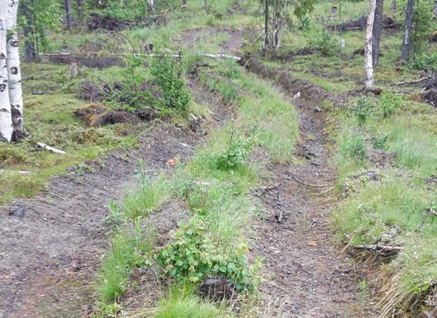 En skogsväg som dragits över en fornlämning.