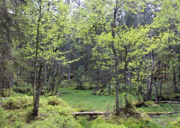 Skogsägarnas frivilliga avsättningar är betydelsefulla bidrag i miljöarbetet.