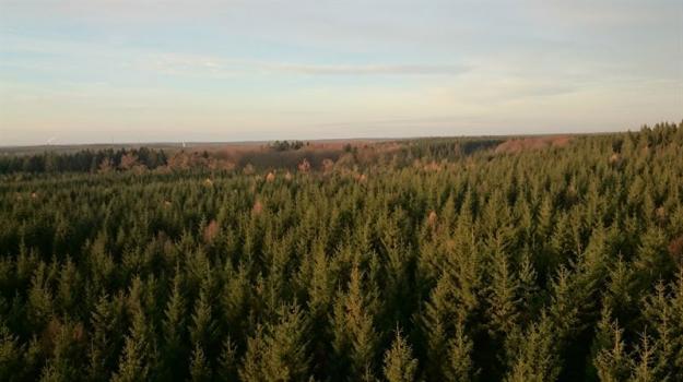 En ny studie visar att extremsommaren 2018 påverkade de nordiska skogarnas koldioxidupptag mer än vad som tidigare varit känt.