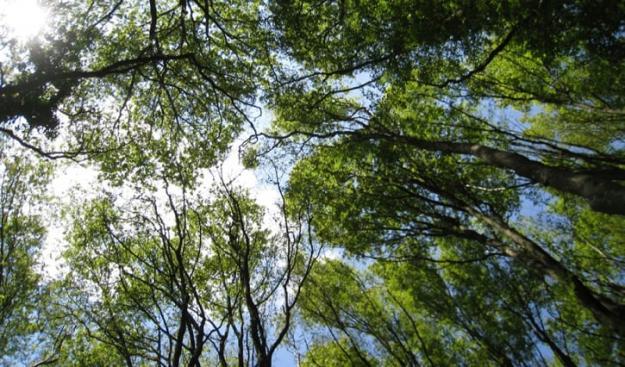Ju tätare krontak, desto större kyleffekt i underbestånden och på markytan. Krontak i Stenshuvuds nationalpark, en av de platser som ingår i nätverket ForestREplot för skogliga långtidsobservationer.