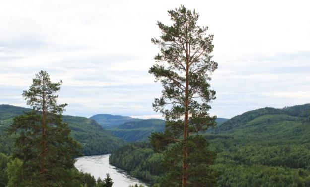 Skog i Norrlands inland.
